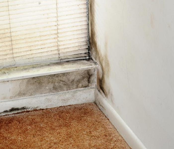 7 Causes Of Mold In Homes